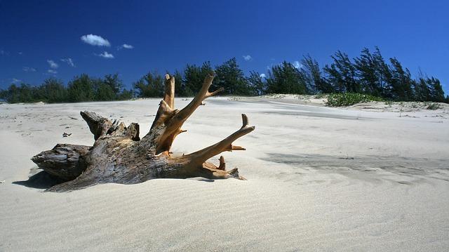 Sur quelle plage trouver du bois flotté ?